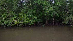 Boat floats on the river of mangroves. Thai boat floats on the muddy river of mangroves on a cloudy day stock video