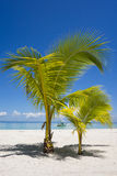 Boat Framed Through Tropical Palm Trees. Boat Framed Through Palm Trees On Tropical White Sand Beach with crystal clear water in Sugar Beach, Santa Fe, Bantayan Stock Photography