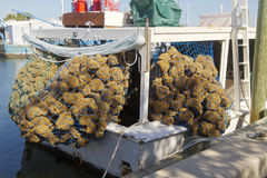 Boat Full Of Sea Sponges Royalty Free Stock Photo