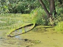 Boat. Godforsaken corner of pond with waterlogged boat Royalty Free Stock Photos