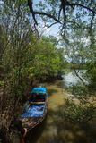 Boat had anchored in estuary around mangrove forest. A boat had anchored in estuary around mangrove forest in krabi area Royalty Free Stock Photography