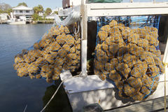 Boat With Harvested Sea Sponges Royalty Free Stock Images