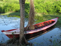 Boat in the lake. Lake in the Amazonia - Brazil Royalty Free Stock Image