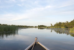 Boat on the lake with green plants in twilight Royalty Free Stock Photos