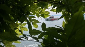 Boat through leaves. A boat through the green leaves royalty free stock images