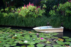 Boat among lilies. A small boat floating on a quiet pond full of lily pads in the tropics Stock Image