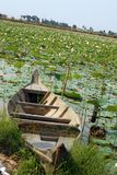 Boat in lotus farm, Siem Reap, Cambodia. Boat on shore of lake in lotus farm in Siem Reap, Cambodia Royalty Free Stock Image
