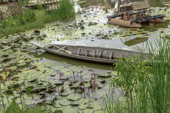 Boat in lotus pond Royalty Free Stock Photography