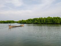 Boat in Mangrove River Forest Conservation. Boat in Mangrove Forest Conservation in Lubuk Kertang, North Sumatra, Indonesia Stock Image