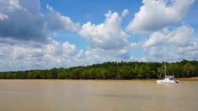 Boat on the mangrove forest Royalty Free Stock Images