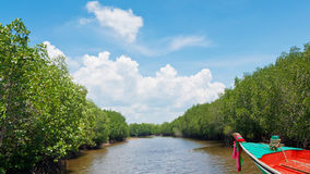 Boat in mangrove forest Stock Photo