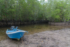 Boat and mangrove in Kood island, Thailand Stock Images