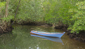 Boat and mangrove in Kood island, Thailand Royalty Free Stock Photo