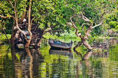 Boat in mangroves Royalty Free Stock Image