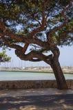 Boat marina, biking route and large tree. Stock Image