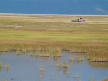 Boat on marsh or wetland Royalty Free Stock Photography