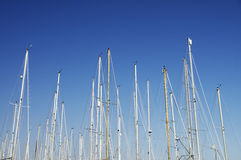 Boat masts. With clear blue sky Royalty Free Stock Image