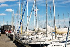 Boat masts. In a marina royalty free stock photography