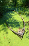 Boat midst of swamps blossom Stock Photography