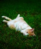 Lazy cat. Cat lying lazy on grass royalty free stock images