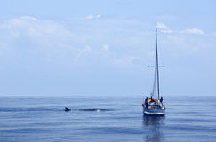 Boat next to whale Royalty Free Stock Photography