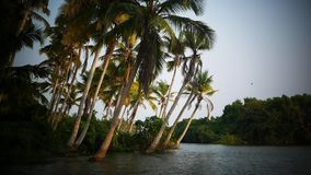 Boat and Palm tree backwater in India Timelapse. Yoga tour by Yantra Kerala India sky and palm stock video footage