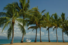 Boat among the palm trees. Palm trees on a hot summer day with a beach sailing on the blue ocean behind Stock Photo