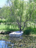 A boat on a pond, tied to a tree. A tin boat on a leaf-covered pond. The boat is tied to a tree, and both are reflected in the water. Some grape vines can be Stock Photos
