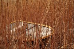 Boat Among Reeds Royalty Free Stock Images