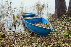 boat in reeds at the lake shore Royalty Free Stock Images
