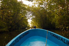 Boat Ride In Mangroves Near Rio Dulce Guatemala Stock Photo
