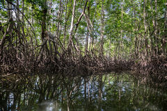 A boat ride through the mangrove forests Stock Photo