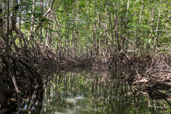 A boat ride through the mangrove forests Stock Photos