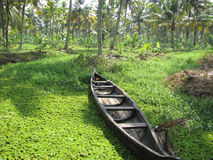 Boat in River. A boat in the lush greenery of the backwaters of Kerala in India Stock Photography