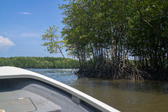 Boat running along the shore of mangrove forest.  Stock Image