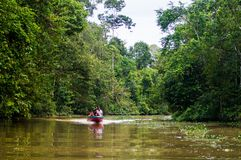 The boat sails along the Kinabatangan River surrounded by tropic. Al forests, Sabah, Borneo. Malaysia Stock Image