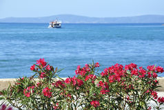 Boat, sea and flowers Stock Photography