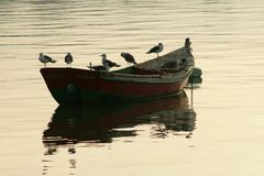 The boat and the seagul Royalty Free Stock Images