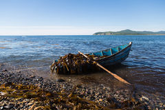Boat with seaweed kelp stands near the shore. Royalty Free Stock Photo