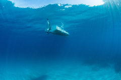 Boat ship from underwater blue ocean. Boat ship from underwater turquoise paradise waters Stock Image