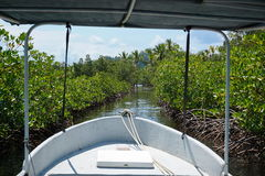 Boat through a small cut in the mangrove Stock Images