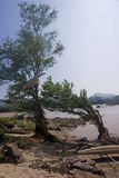 Boat smashed on a tree on the river Mekong Stock Photography