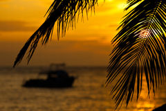 Boat at sunrise framed by coconut branches. In Grand Cayman Stock Photo