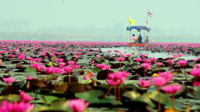 Boat tour on the lake of red lotus Stock Images