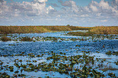 Boat tour through the marsh in the Everglades National Park, Flo Stock Photos