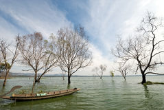 Boat and tree in Bangpra Reservior,Thailand Royalty Free Stock Photo