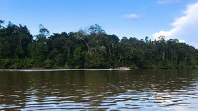 Boat trip along the river of Kinabatangan, in Borneo, Malaysia stock video footage