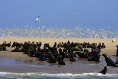 Boat Trip Around Walvis Bay Royalty Free Stock Images