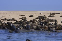 Boat Trip around Walvis Bay Stock Images