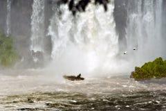 Boat trip to Iguazu Falls, Tour to Water Curtain of Iguazu Waterfalls. People on boat trip to curtain of water on Iguazu Falls, Argentina. Two heron birds flying royalty free stock photo